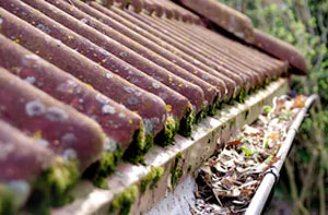 Gutter Cleaning Basingstoke (01256)